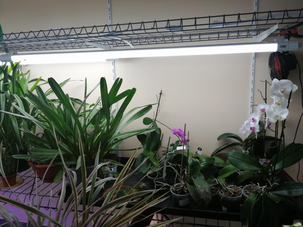 voici mes n'orchidée dans mon phytotron Img_2038