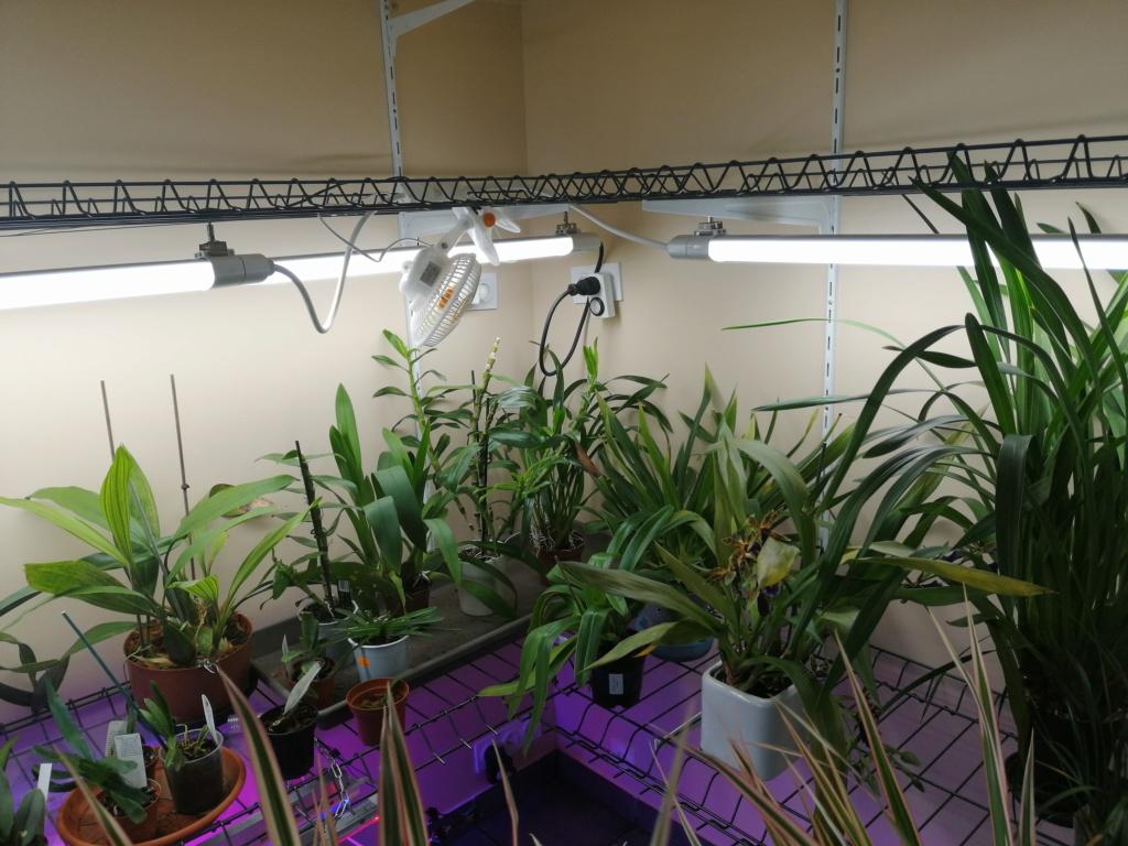 voici mes n'orchidée dans mon phytotron Img_2039