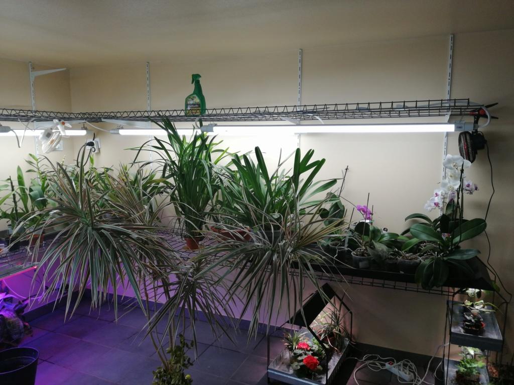 voici mes n'orchidée dans mon phytotron Img_2040