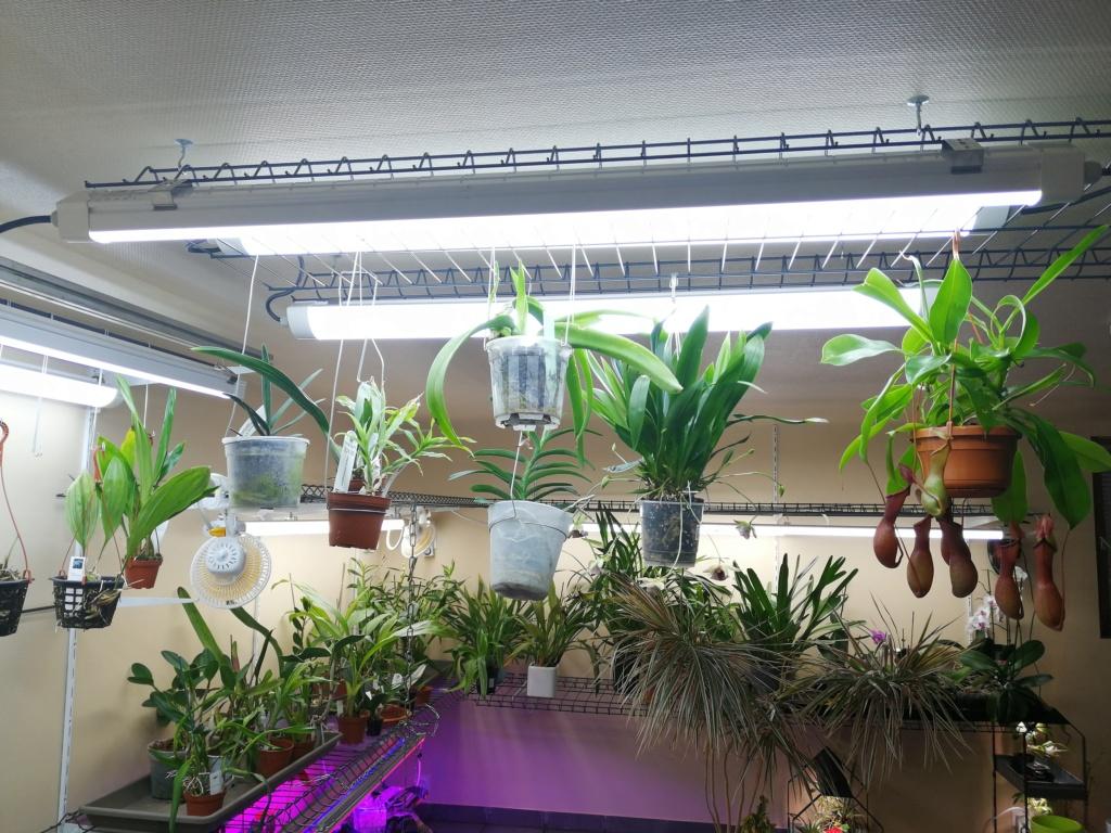voici mes n'orchidée dans mon phytotron Img_2042
