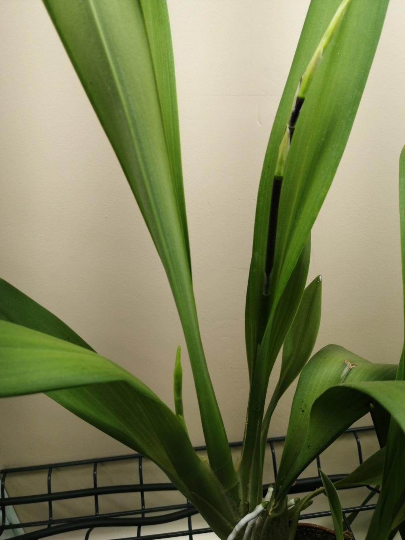 Future floraison et décalages  Img_2051