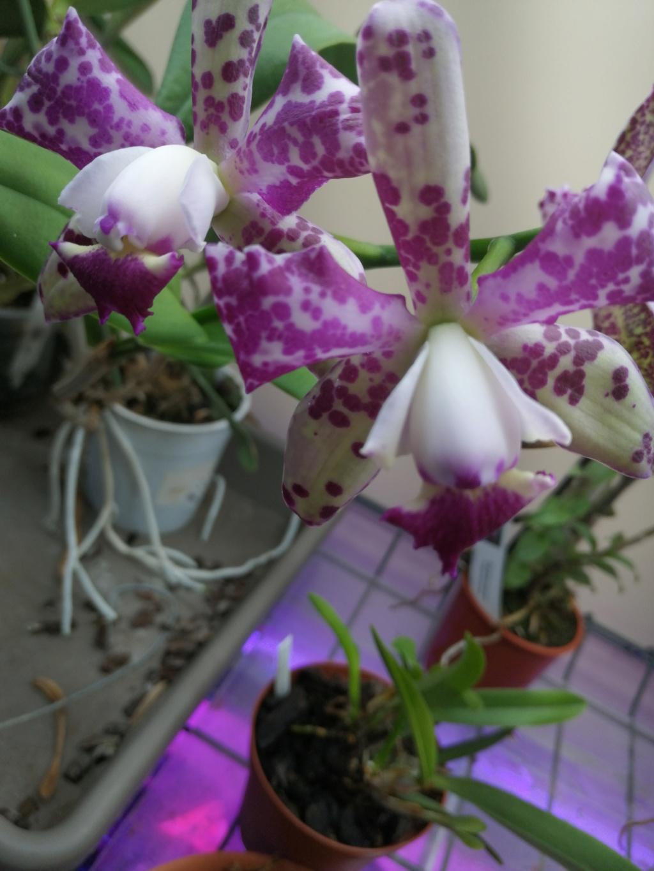Future floraison et décalages  Img_2085