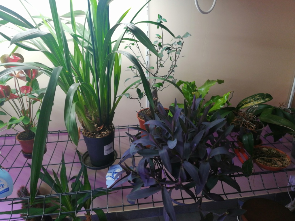 voici mes n'orchidée dans mon phytotron Orga_310
