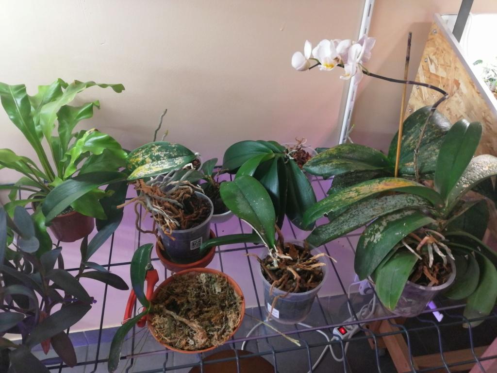 voici mes n'orchidée dans mon phytotron Orga_410