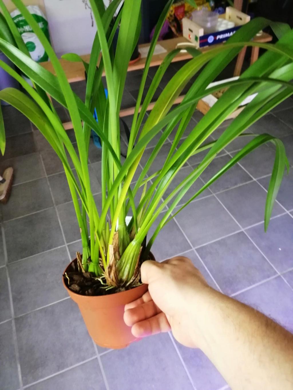voici mes n'orchidée dans mon phytotron Trigon10