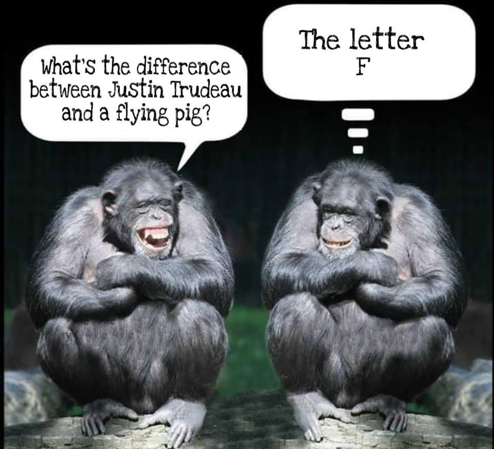 Il est bon ce Trudeau ! Notre meilleur allié pour gagner en 2019- 64537410