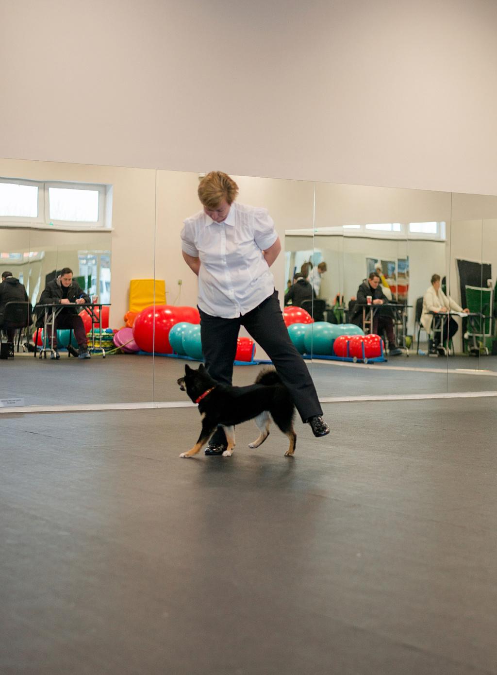 Танцы с собаками - Страница 6 Dsc_1911