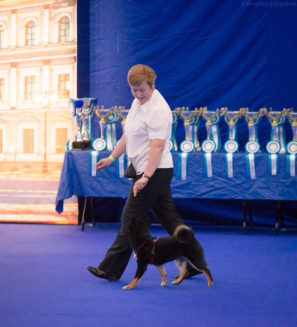 Танцы с собаками - Страница 5 Dsc_7114