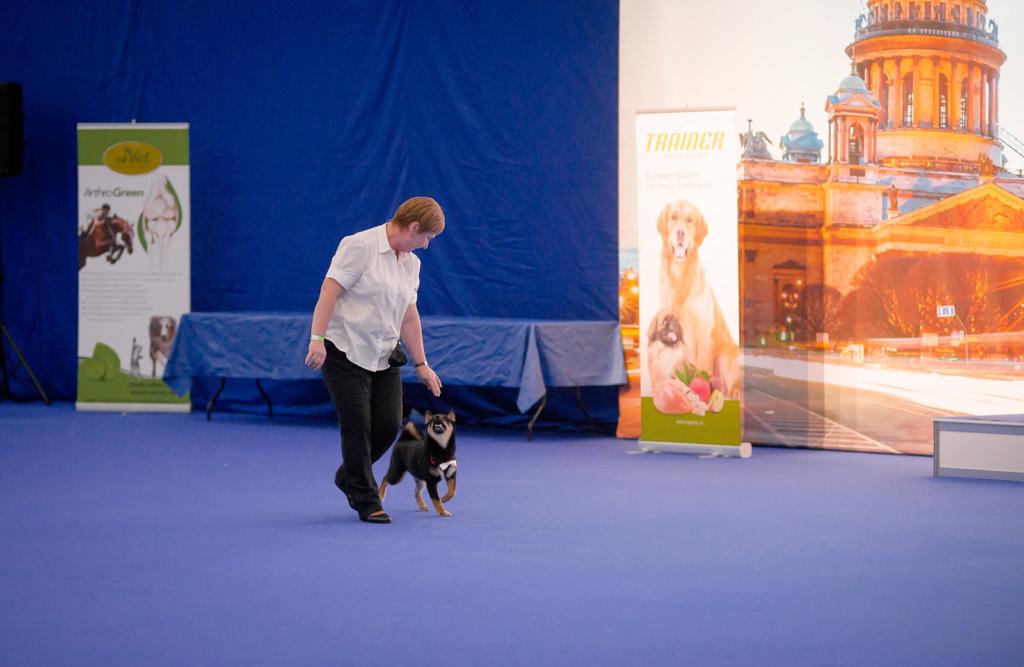 Танцы с собаками - Страница 5 Dsc_7115
