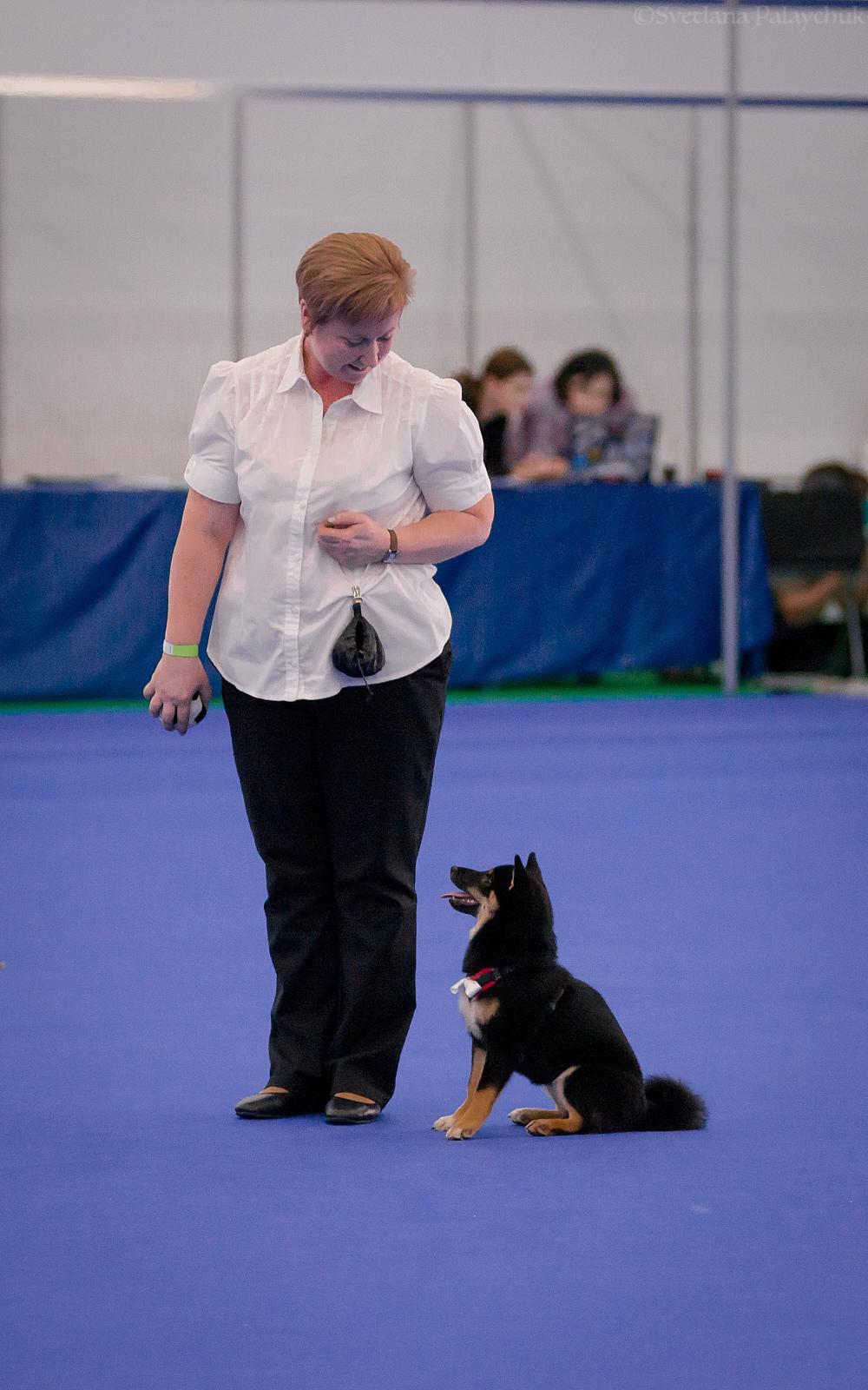 Танцы с собаками - Страница 5 Dsc_7116