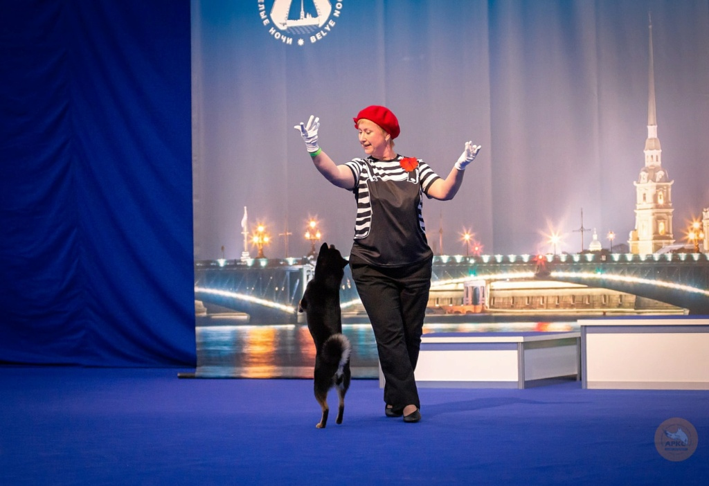 Танцы с собаками - Страница 7 Mdqzsk10