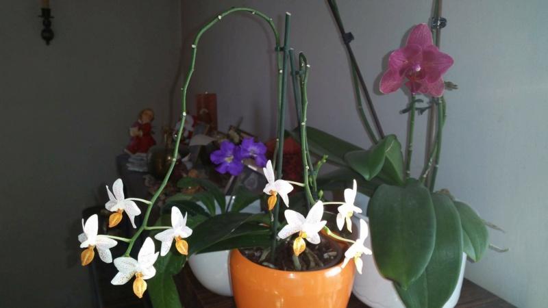 Orchidee Schimmel/Pilz?? Hilfe :( 11045310