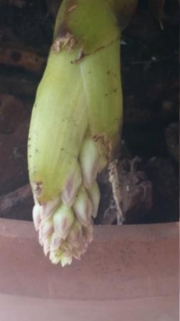 Cym. aloifolium - Seite 3 20200914