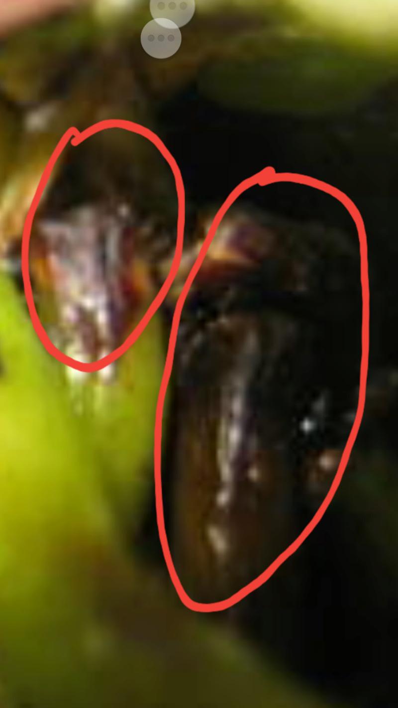 Phalaenopsis corningiana - Seite 2 Screen36