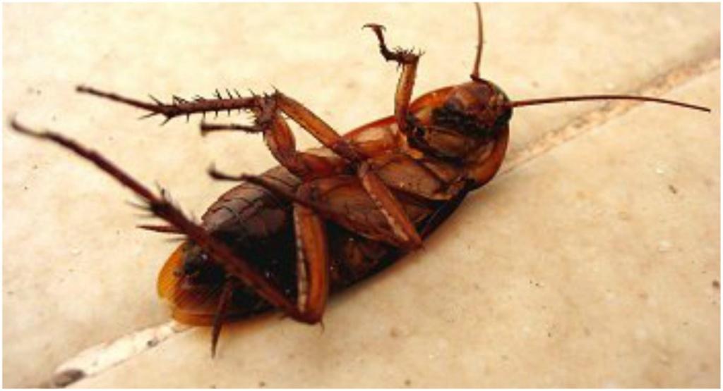 Alfonso, la cucaracha. 710