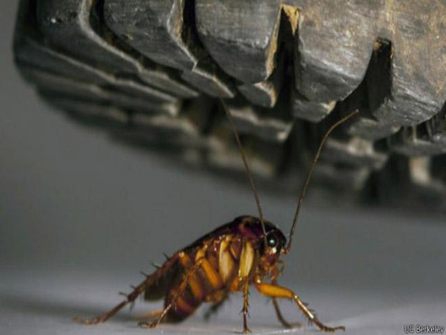 Alfonso, la cucaracha. Cucara10