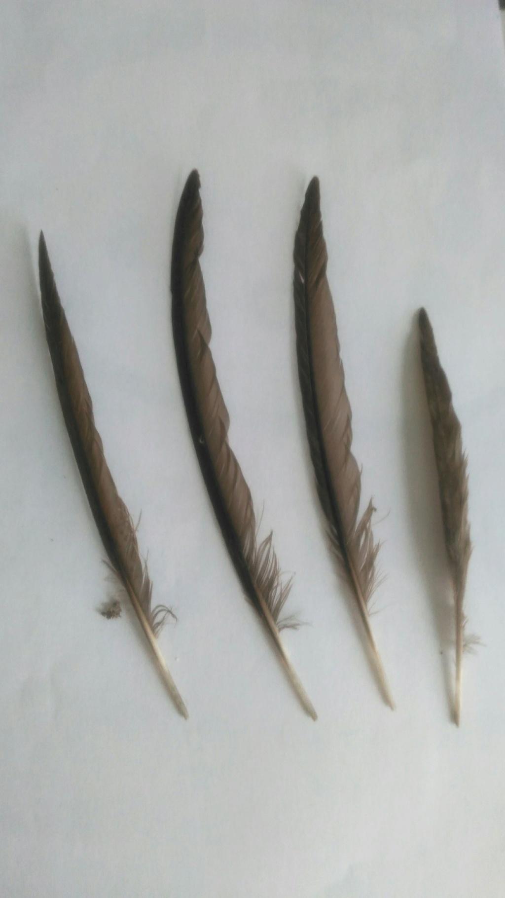 Nouvelles plumes 15318410