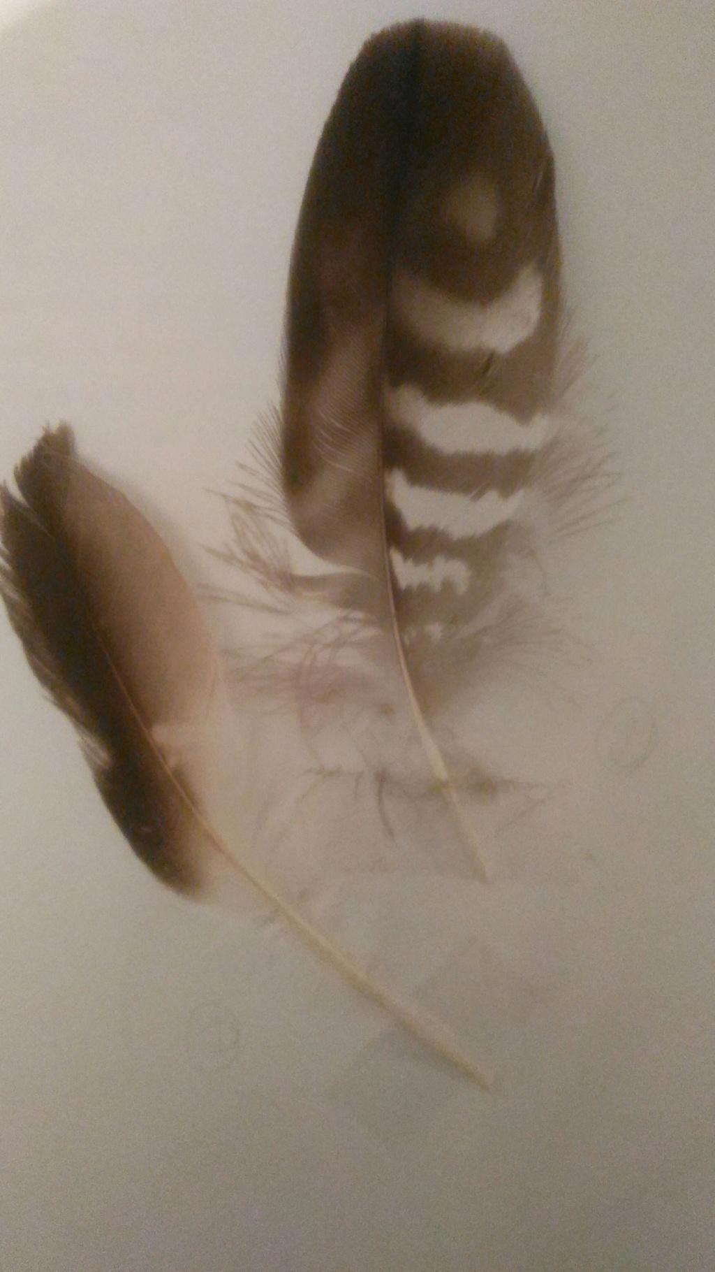 Plusieurs plumes 15409110