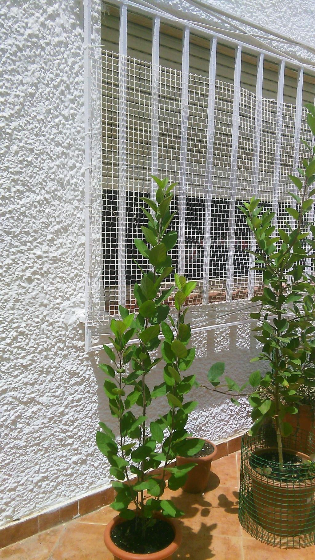 Come iniziare a bonsai un Melo nato da seme Img_2021