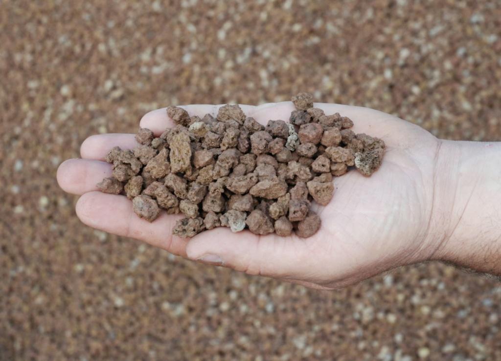 Come iniziare a bonsai un Melo nato da seme Lapill10