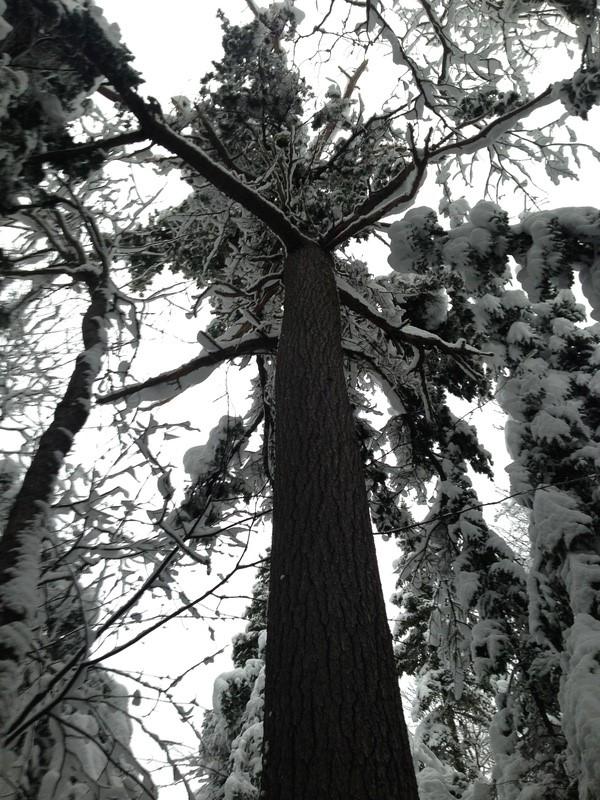 Vive l'hiver Gzoant10