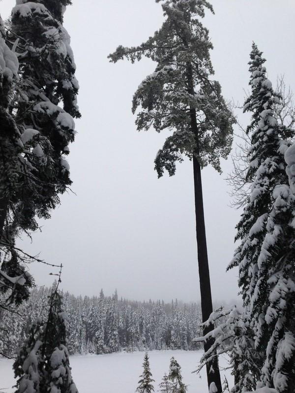 Vive l'hiver Petit_10