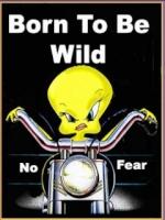 60% des motards craignent les automobilistes 6169357