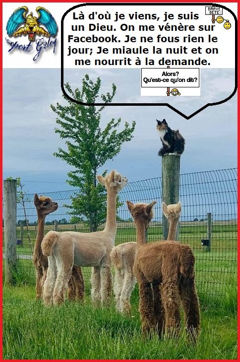 Une image marrante par jour...en forme toujours - Page 19 Cccdgf10