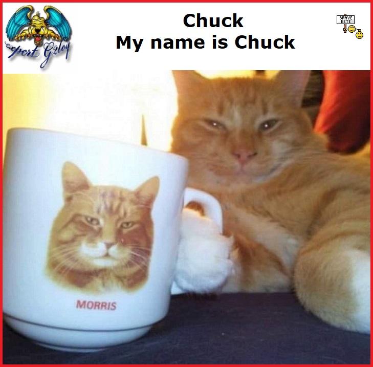 Une image marrante par jour...en forme toujours - Page 33 Chuck_10