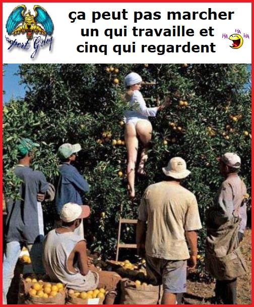 Une image marrante par jour...en forme toujours - Page 18 La_bon10
