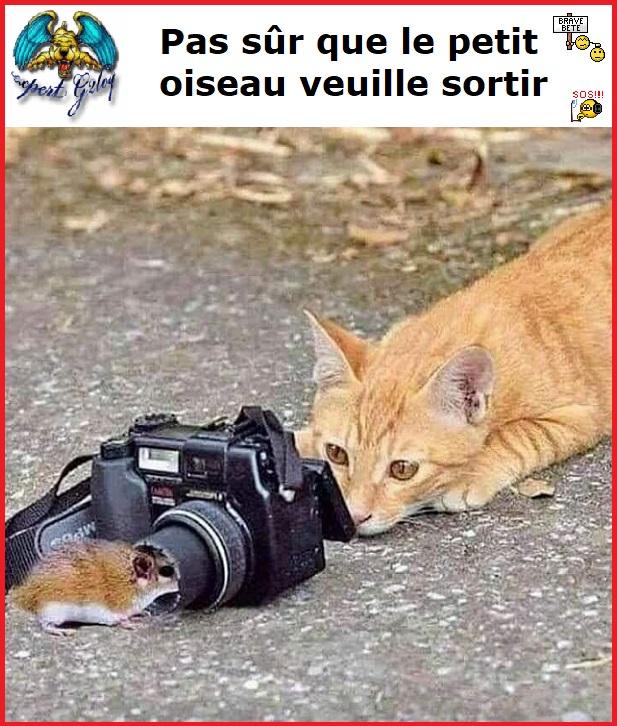 Une image marrante par jour...en forme toujours - Page 20 Pas_su10