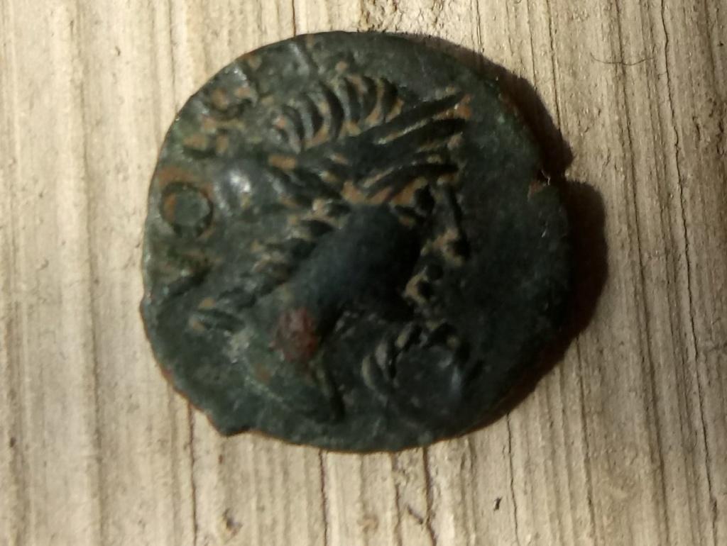 Bronze au démos, volcos arecomicos Areco_10
