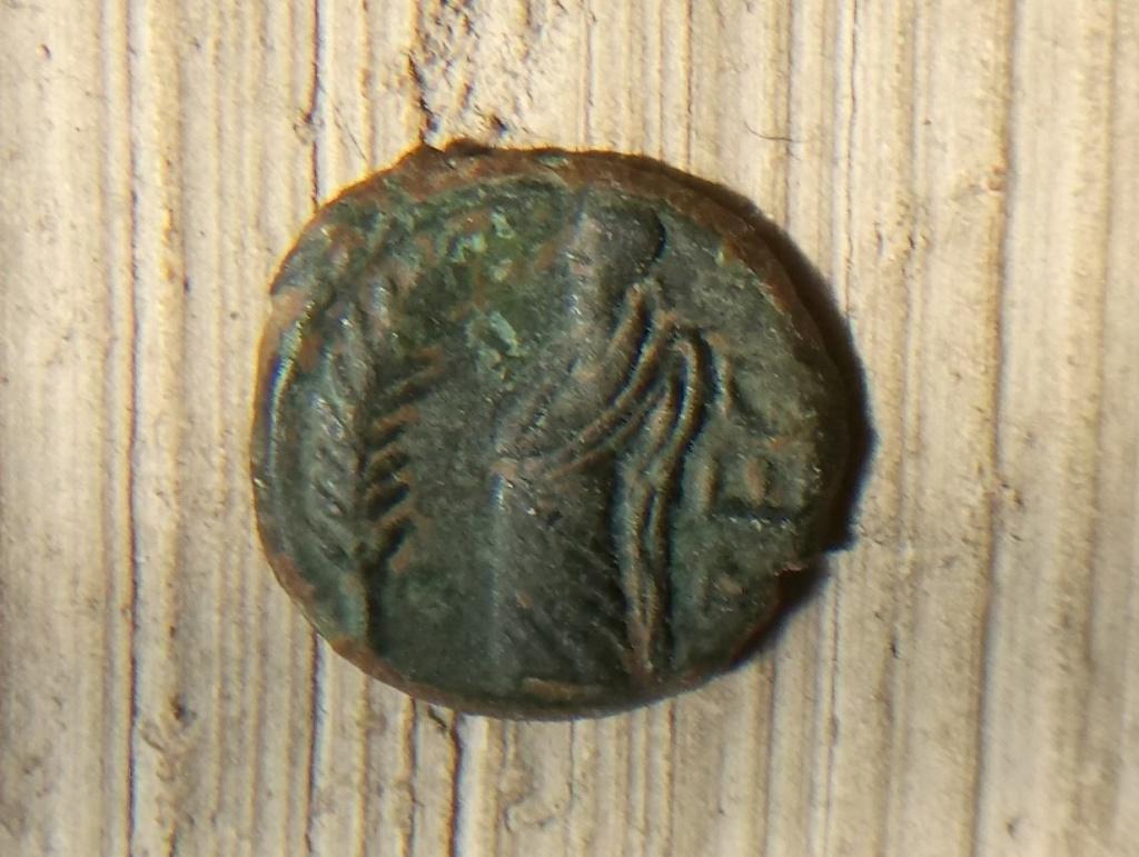 Bronze au démos, volcos arecomicos Areco_11