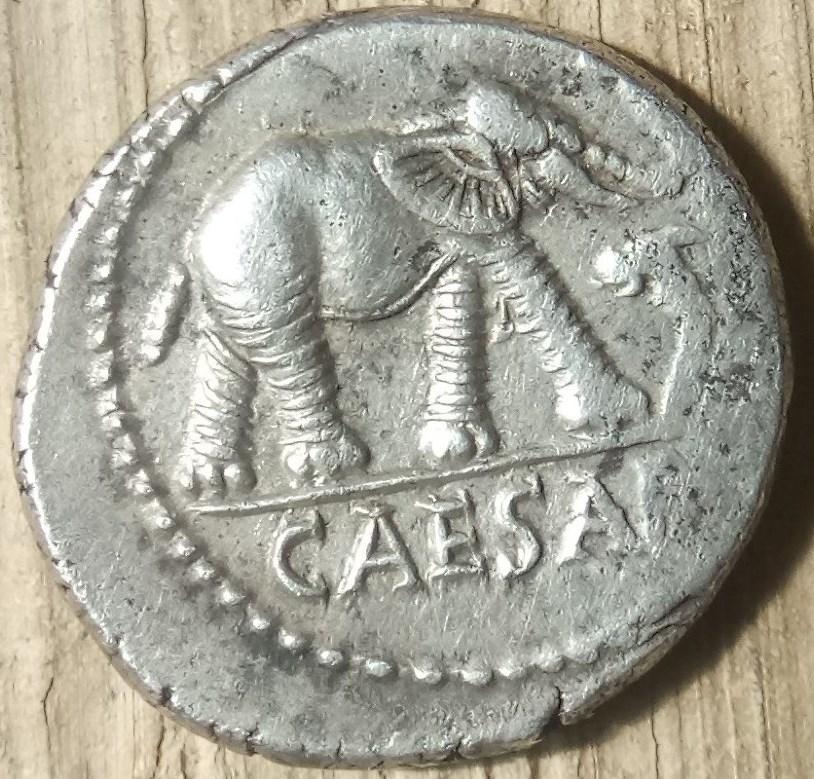 Denario Julio César. Elefante pisando una serpiente. Caesar11