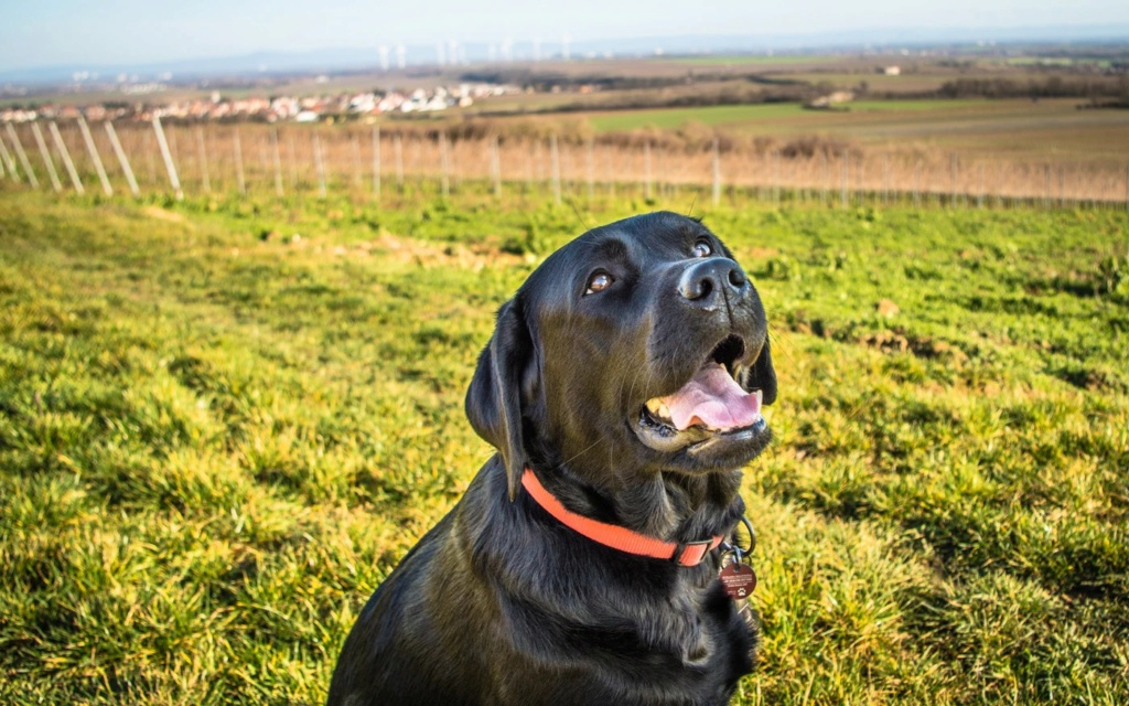 A dog's gnaw-cleaning bone has the same effect as you brush your dog's teeth Dog_ca15