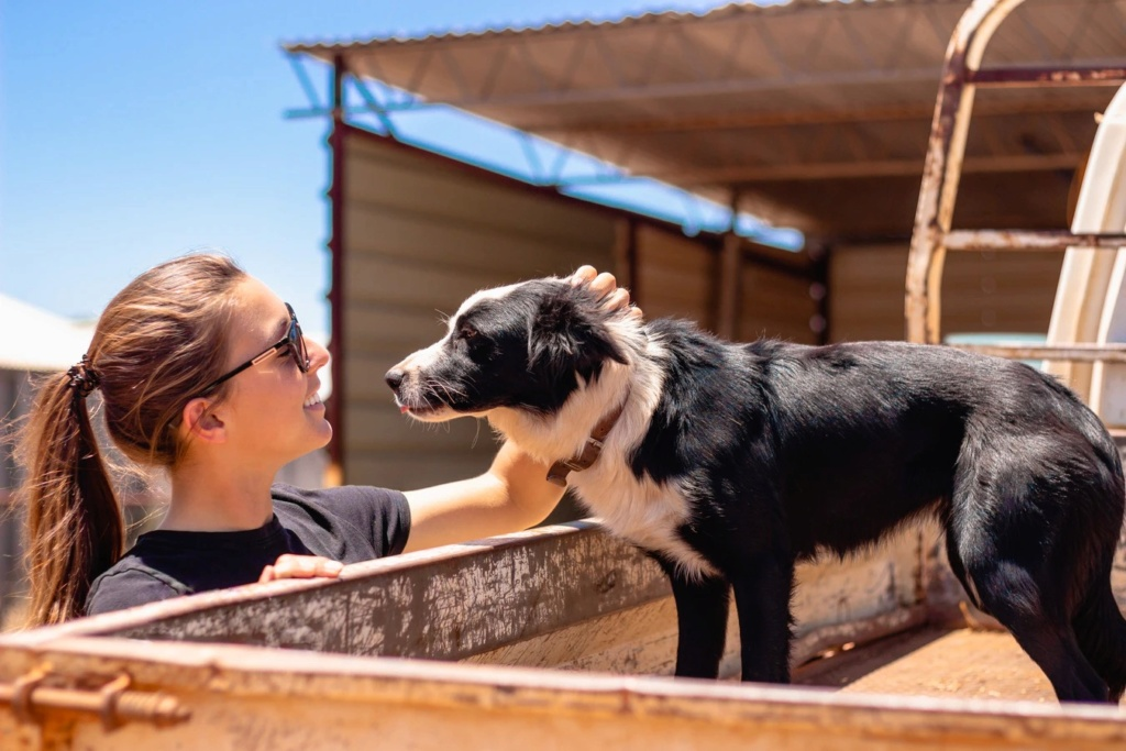 dog training exercises possess conditions such as Dog_ca17