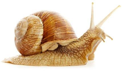 """Объедини"" - Страница 4 Snail10"