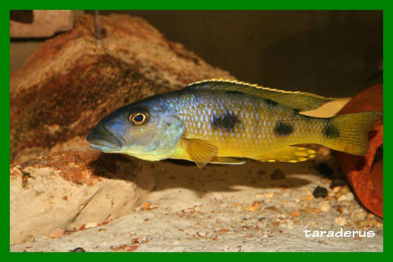 Votre poisson préféré ...  10_210
