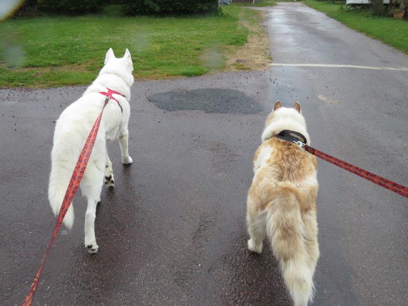 Yocco et Anook en vacances 13_yoc10