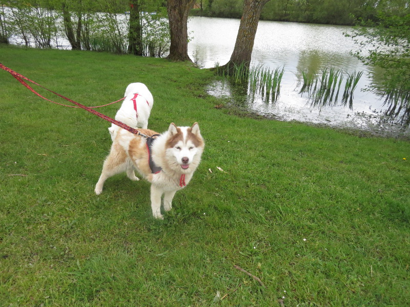 Yocco et Anook en vacances 26_yoc10