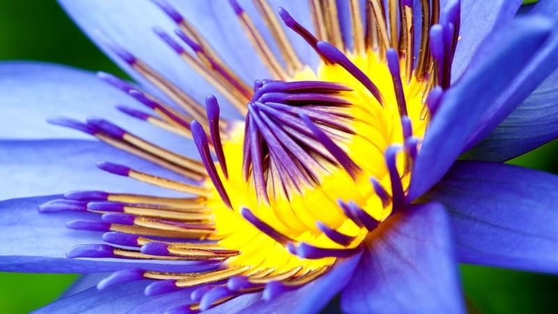 les fleurs - Page 2 4a134510