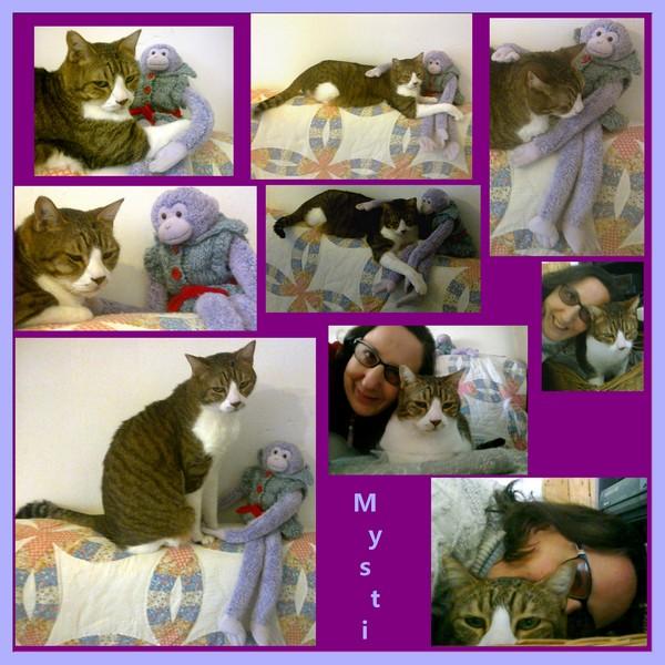 Tigrou et Mysti adopét à l'école de chat libre de Toulouse Mysti_10