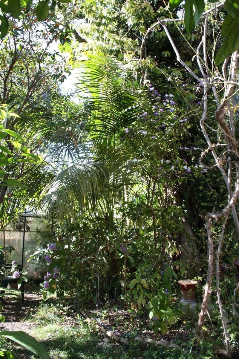 Brunfelsia pauciflora Sous_l10
