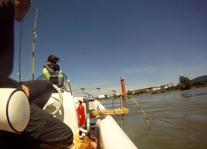 Initiation Pêche sur le Rhône C1010