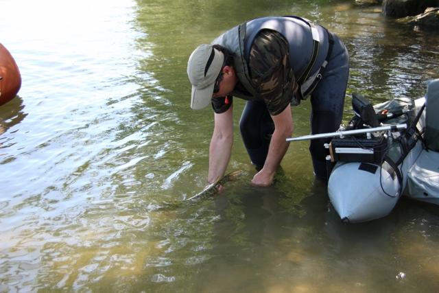 Initiation Pêche sur le Rhône Img_0219