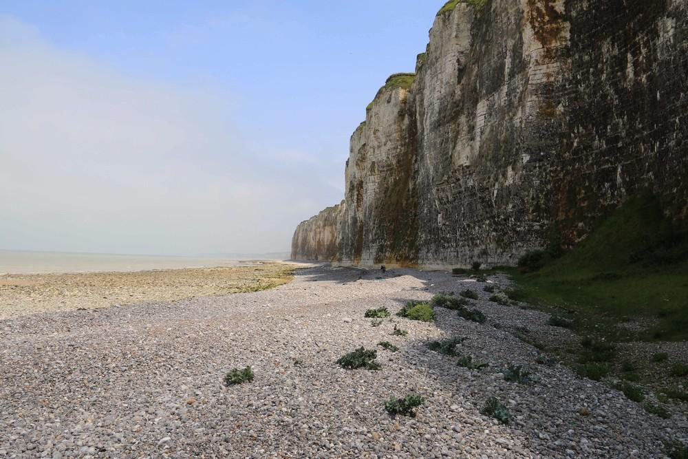 En Normandie on est près de nos choux Crambe14