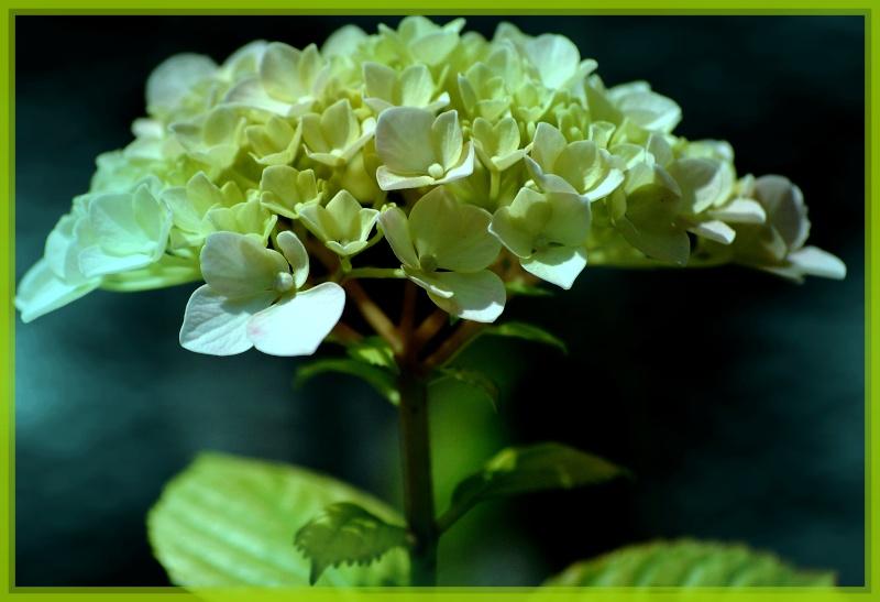 fleurs en vrac! 10_bis10