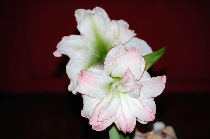 fleurs en vrac! - Page 2 Aout_054