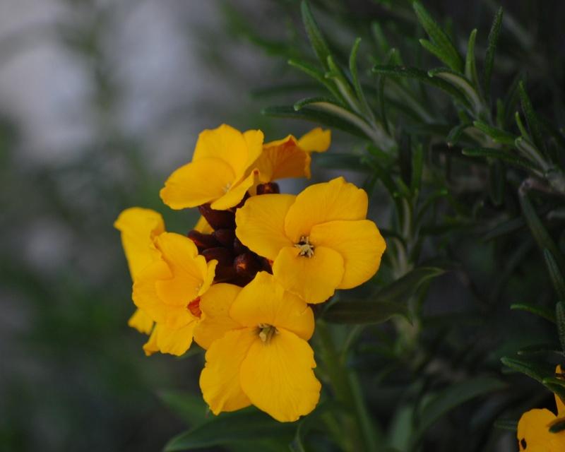 fleurs en vrac! Calais21