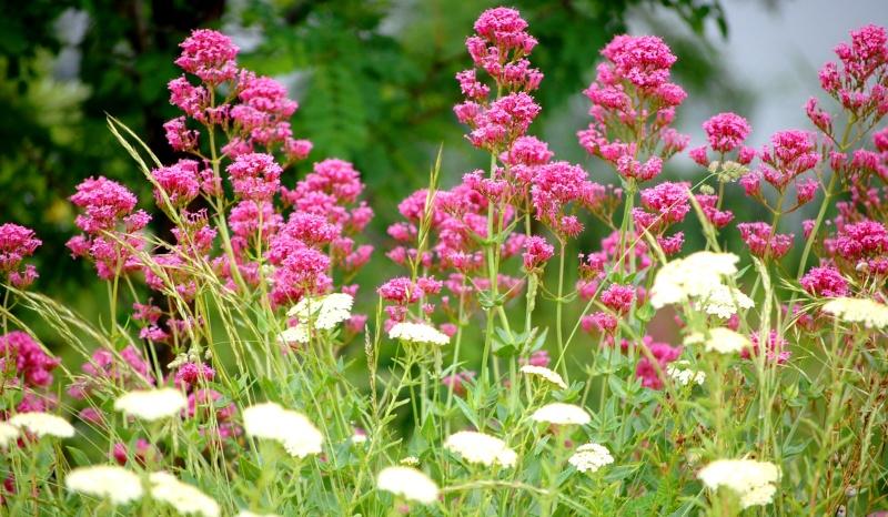 fleurs en vrac! Fleurs11